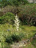 珠兒愛拍:其他植物:刺葉王蘭8
