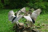 飛鳥練拍~大安森林公園:v 135.JPG