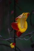 2012與春天有約~台北植物園:1426725652.jpg