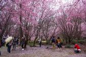 2012武陵農場賞櫻:1837851641.jpg