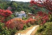 98.04賞楓:台北奧萬大.植物園:1173783001.jpg