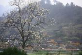 多彩貴州8日遊--雲峰屯堡古鎮&金海雪山:1045687237.jpg