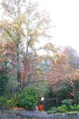 2012武陵冬景~楓葉紅銀杏黃:1305735518.jpg