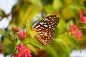 蝴蝶真美麗:1677431241.jpg