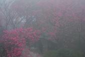 2013陽明山~迷霧朦朧之美:1308565178.jpg