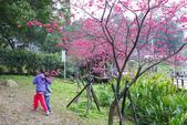 2013新竹麗池之櫻.中正紀念堂梅櫻:1443372221.jpg