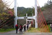 2012武陵農場賞櫻:1837851622.jpg