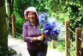 2013與繡球花的美麗約會:1235902642.jpg