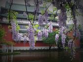 2013紫藤咖啡園:1744203254.jpg