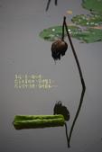 2012留得殘荷聽雨聲:1015061811.jpg