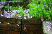 2013紫藤咖啡園:1744197448.jpg