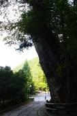 馬告生態公園.明池森林遊樂區:1807557010.jpg