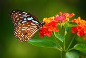 蝴蝶真美麗:1677431242.jpg