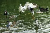 飛鳥練拍~大安森林公園:v 021.JPG
