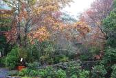 2012武陵冬景~楓葉紅銀杏黃:1305735519.jpg