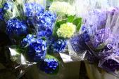 2013與繡球花的美麗約會:1235902643.jpg