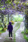 2013紫藤咖啡園:1744197450.jpg