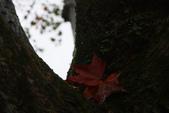 2012拱北殿賞楓趣:1387901218.jpg