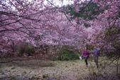 2012武陵農場賞櫻:1837851643.jpg