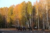 北疆金秋(3)喀納斯湖、禾木村:IMG_4636.JPG