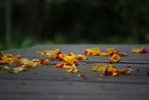 2012與春天有約~台北植物園:1426725654.jpg