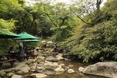 98.04賞楓:台北奧萬大.植物園:1173783003.jpg