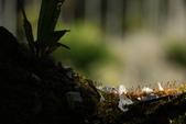 梅景如畫——烏松崙森林渡假營(石家梅園):f 055.JPG