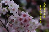 綠繡眼VS大漁櫻:G 084+字.jpg