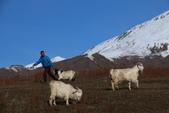 北疆金秋(3)喀納斯湖、禾木村:IMG_4804.JPG