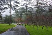 2012武陵冬景~楓葉紅銀杏黃:1305735535.jpg