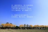 2020黃花風鈴木(嘉義):