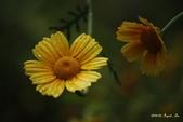 9803花兒寫真:1470786609.jpg