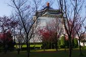 2013新竹麗池之櫻.中正紀念堂梅櫻:1443385355.jpg