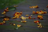 2012與春天有約~台北植物園:1426725655.jpg