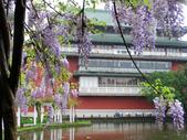 2013紫藤咖啡園:1744203255.jpg