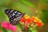 蝴蝶真美麗:1677431244.jpg