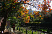 """2013台北植物園~獨領""""楓""""騷:1029877537.jpg"""