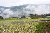 2012武陵冬景~楓葉紅銀杏黃:1305735477.jpg