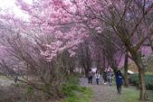 2012武陵農場賞櫻:1837851644.jpg