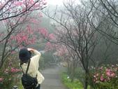 2013陽明山~迷霧朦朧之美:1308565230.jpg