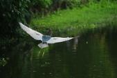 飛鳥練拍~大安森林公園:v 048.JPG