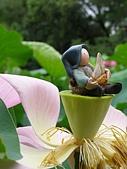 珠兒愛拍:水生植物:荷塘仙子