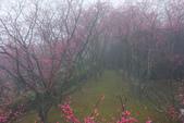 2013陽明山~迷霧朦朧之美:1308565181.jpg