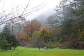 2012武陵冬景~楓葉紅銀杏黃:1305735537.jpg