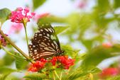 蝴蝶真美麗:1677431245.jpg