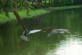 飛鳥練拍~大安森林公園:v 035.JPG