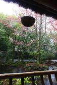 2012武陵冬景~楓葉紅銀杏黃:1305735526.jpg