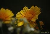 9803花兒寫真:1470786613.jpg