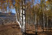 北疆金秋(3)喀納斯湖、禾木村:IMG_4922.JPG