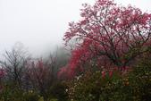 2013陽明山~迷霧朦朧之美:1308565160.jpg